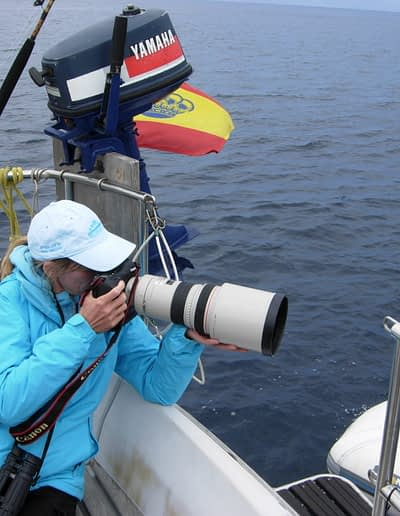 Nature photography. Bird and whalewatching at a glance in the Strait