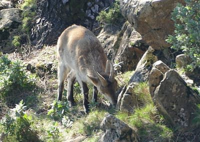 WILDLIFE TOUR: Malaga province, Andalusia at its best.
