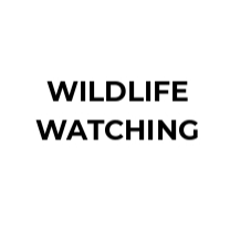 Expert nature guide Wildlife watching in Andalusia